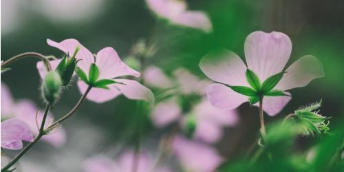 bach flowers, bach flower remedies, bach flower frequencies, bach flower sound frequencies